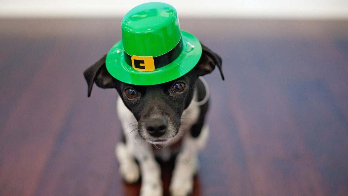 St. Patrick's Day Deals and Freebies