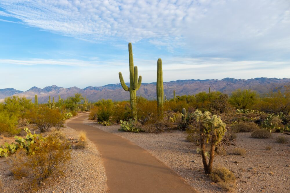 What Is the Minimum Wage in Arizona?
