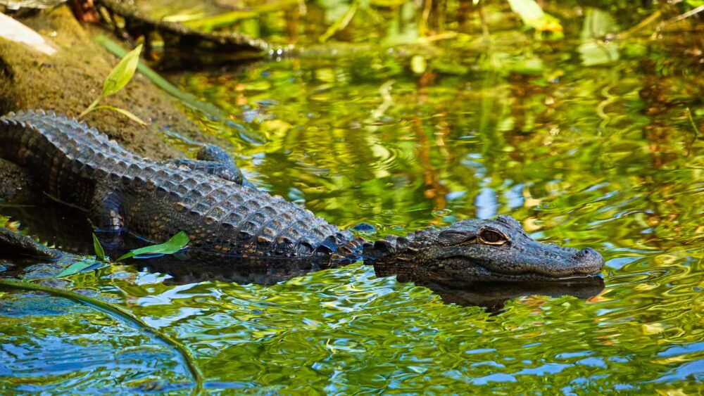 Free Things To Do in Tallahassee, Florida